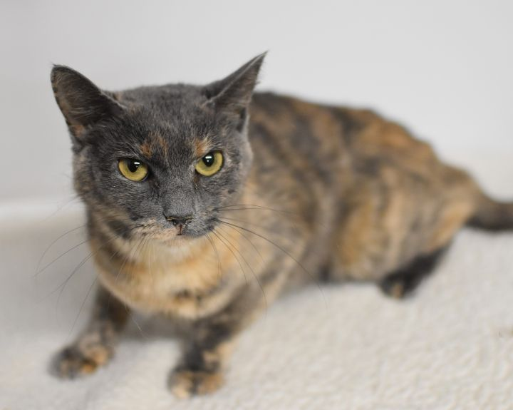 Lily is so lovely!  LOVER ALERT - THERAPY cat 4