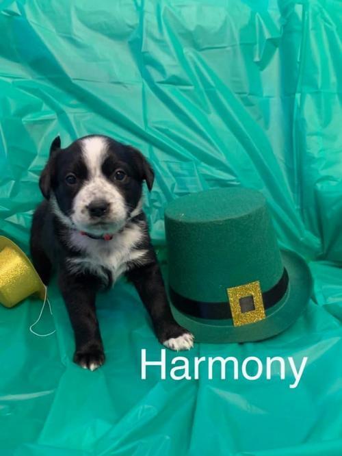 Harmony (SC) 1