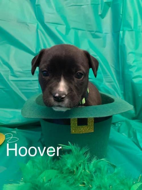 Hoover (SC) 1