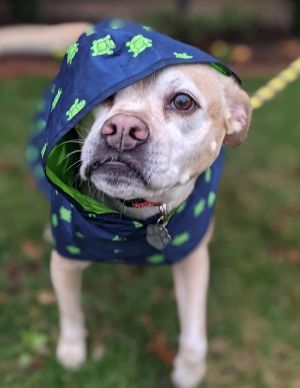 TO APPLY GO TO wwwLuckyDogRefugecom Meet Bella an 11 year old snuggle bug She loves to be outs