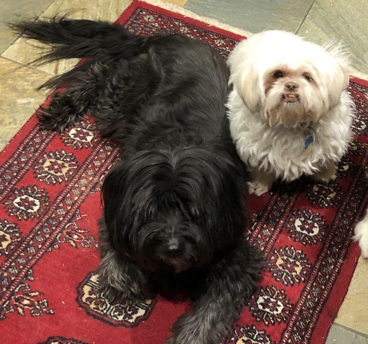 Ella and Torchi 1