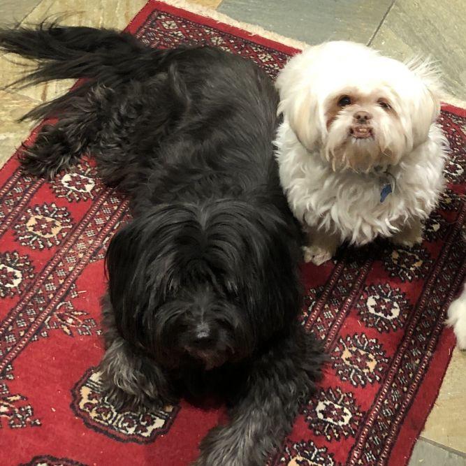 Ella and Torchi