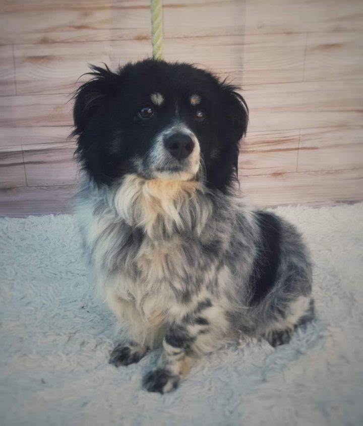 London, an adopted Spaniel in San Diego, CA