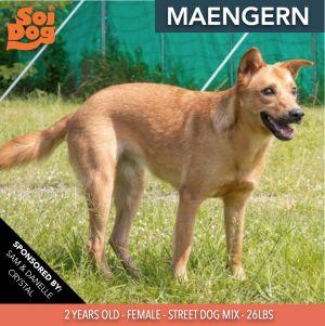 Maengern