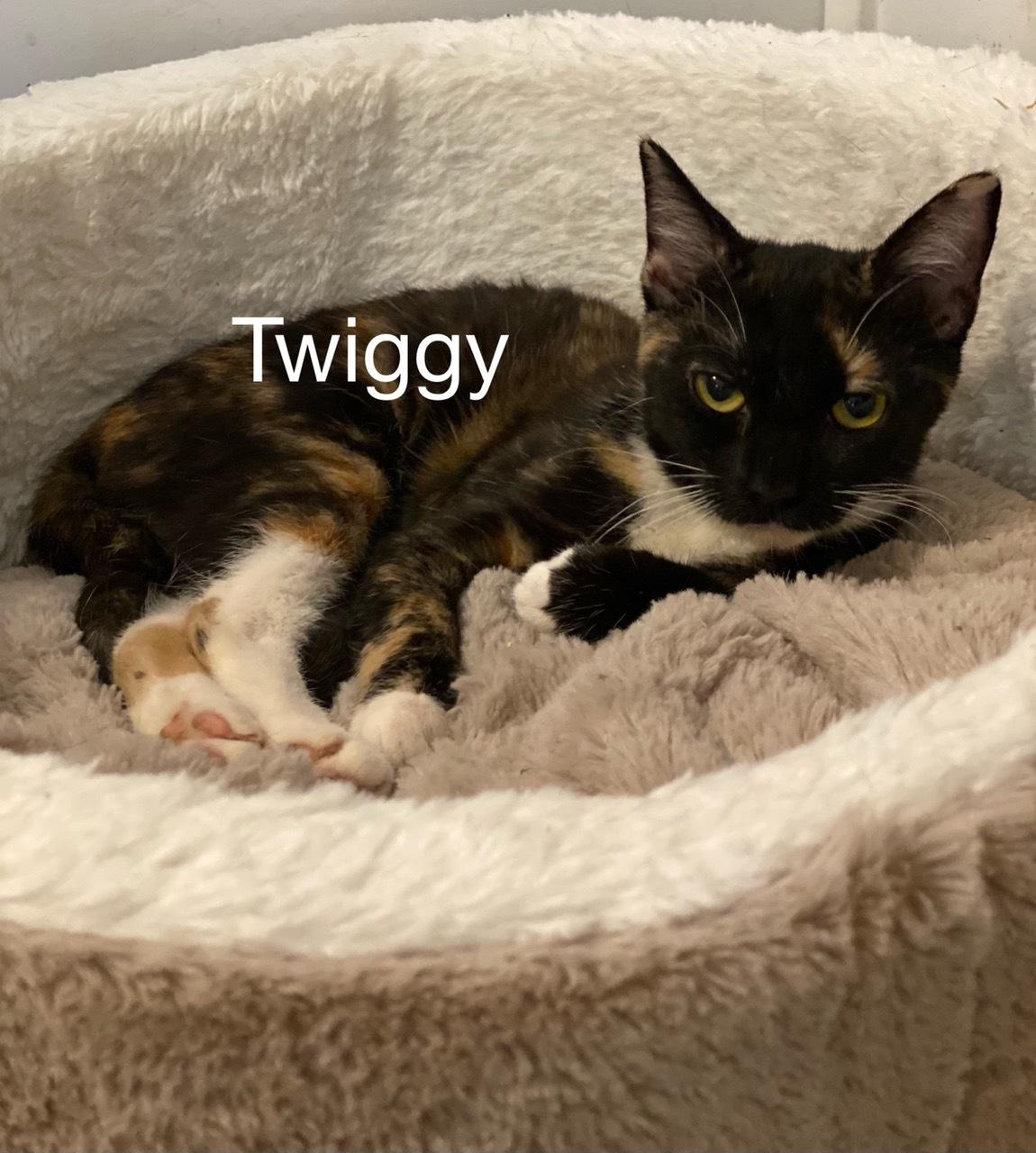Twiggy detail page