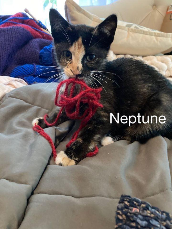 Neptune 1