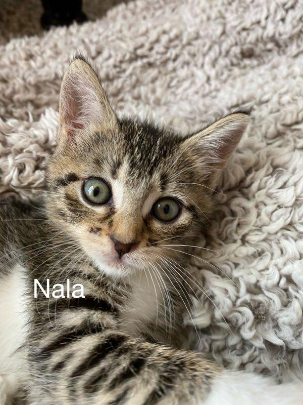 Nala 1