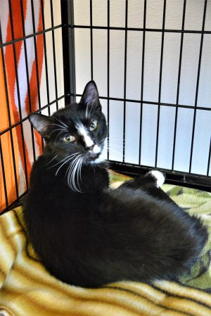 Meet GUS sadly he came from a hoarding situation Now he is just waiting for the right home he was