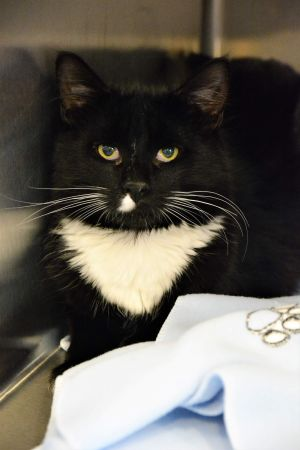 Meet HARRISON sadly he came from a hoarding situation Now he is just waiting for the right home he