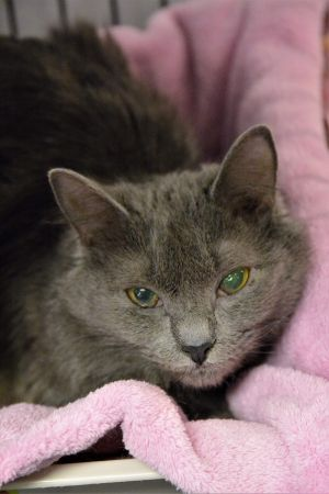 Meet LUCY sadly she came from a hoarding situation Now she is just waiting for the right home she w