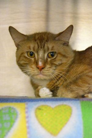 Meet MELVIN sadly he came from a hoarding situation Now he is just waiting the right home he was me