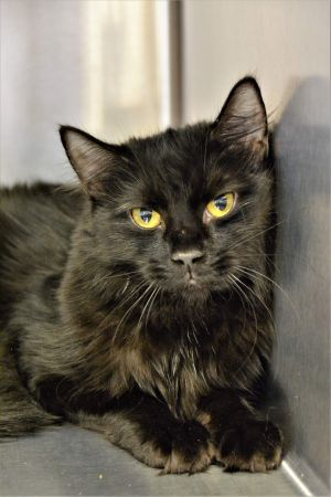 Meet Miranda sadly she came from a hoarding situation Now she is just waiting for the right home sh