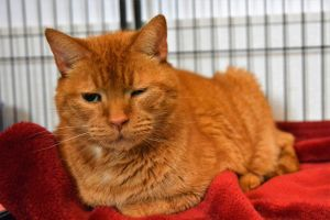 Whiskers has a cat or kitten to fulfill every dream every home and every heart The shelter is fil