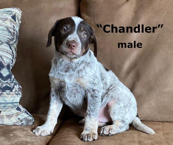 Chandler 1