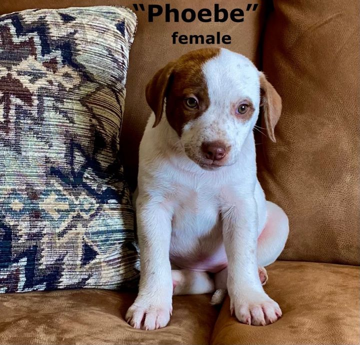 Phoebe 1