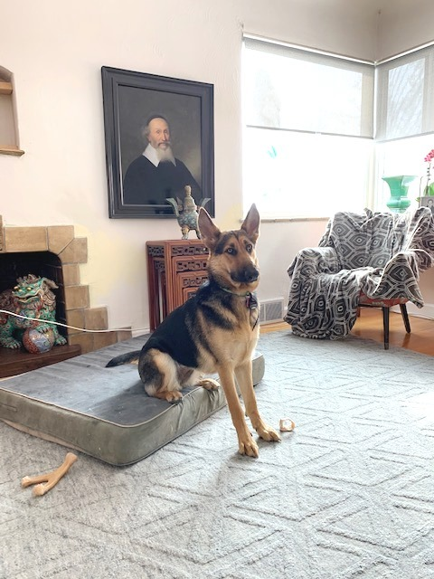 Paisley, an adoptable German Shepherd Dog in Denver, CO_image-6