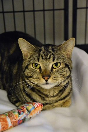Meet SAMMY sadly he came from a hoarding situation Now is just waiting for the right home he was me