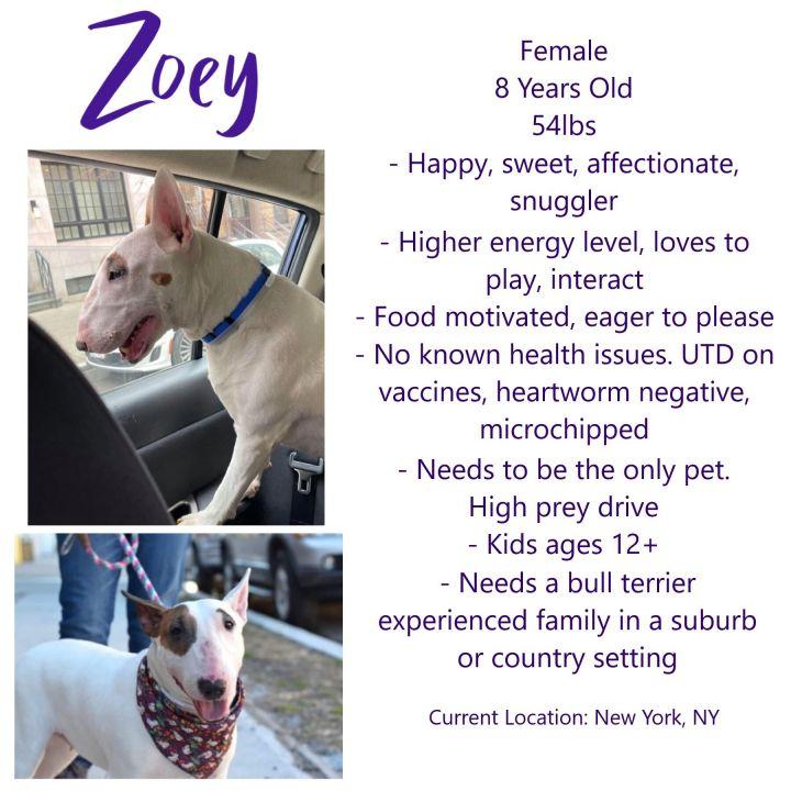Zoey 6