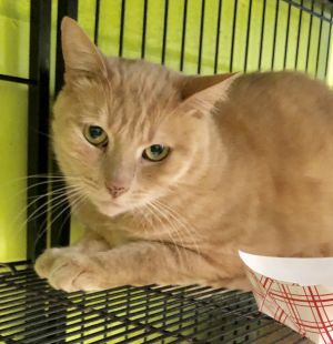 Im a shy guy who will take a while to warm up to you I recently came to the shelter