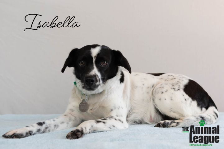 Isabelle, an adoptable Jack Russell Terrier & Dachshund Mix in Clermont, FL