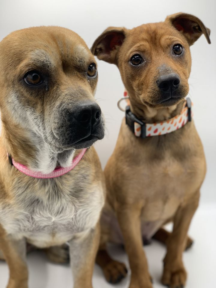 Queen & Prince, an adoptable Mixed Breed in Studio City, CA