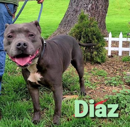 Diaz 1