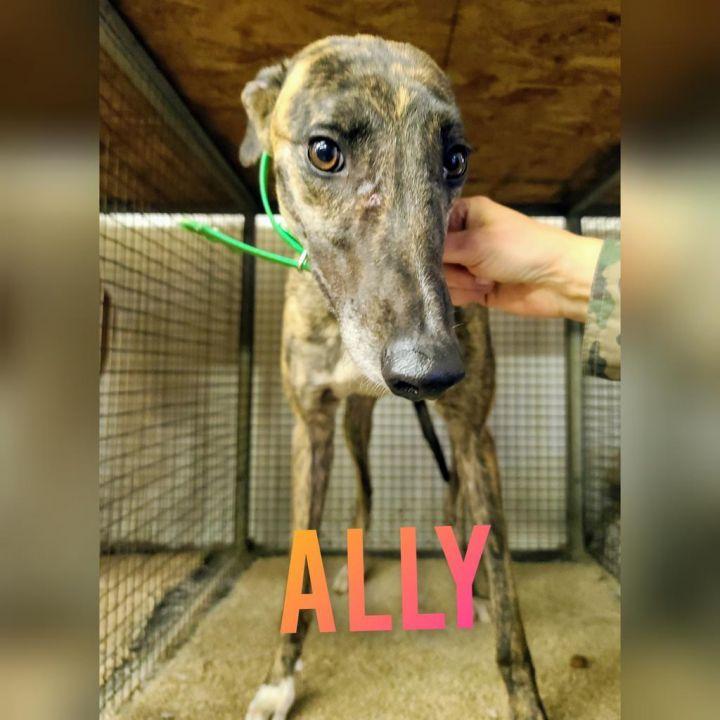 Ally 1