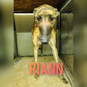 Riann