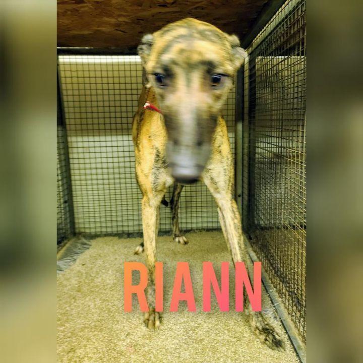 Riann 1