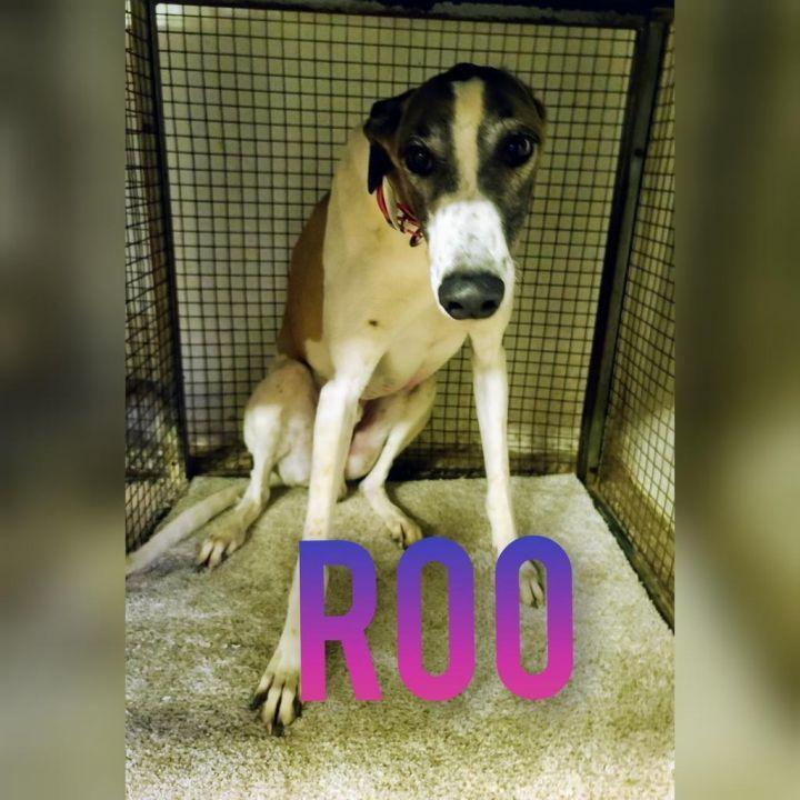 Roo 1