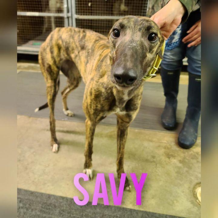 Savy 1