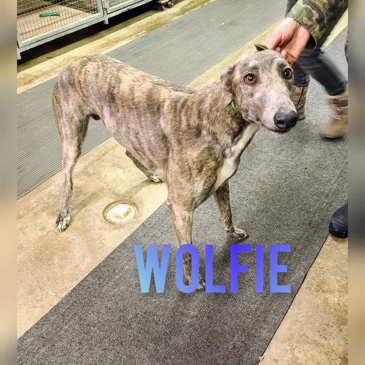 Wolfie 1