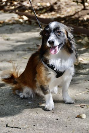 WE ARE NO LONGER ACCEPTING APPLICATIONS FOR TOBIAS Tobias was rescued by a concerned couple at a Wa