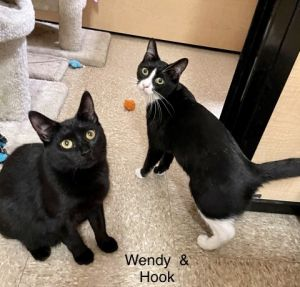 CAPTAIN HOOK  WENDY L are ONLY ADOPTABLE AS A PAIR They are ideal siblings for an individual or fa