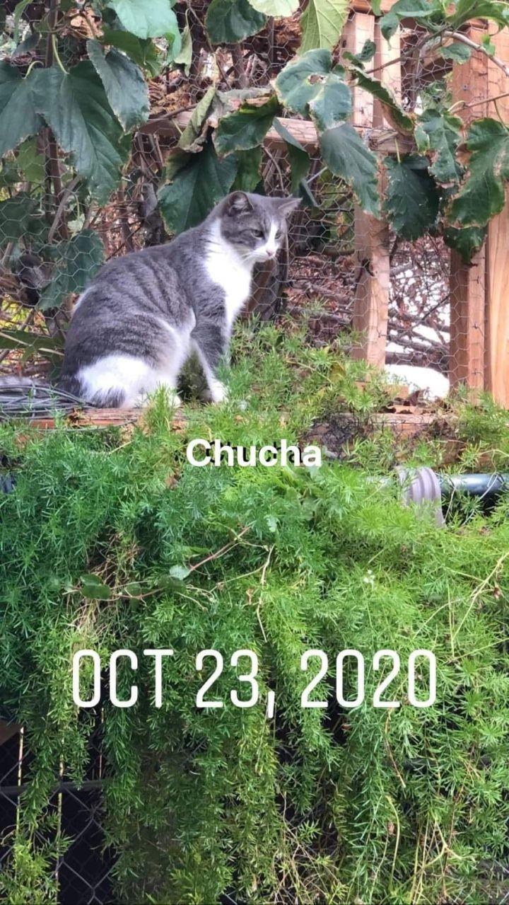 Chucha 2