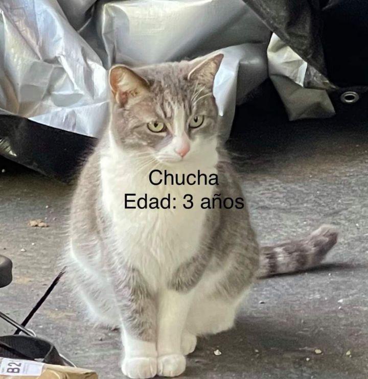 Chucha 4