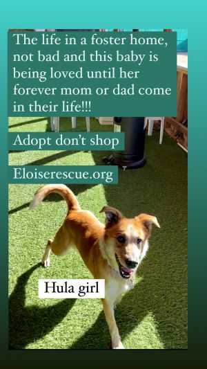 Hula has been trained highly trained we found her abandoned in a warehouse and found the owner who h