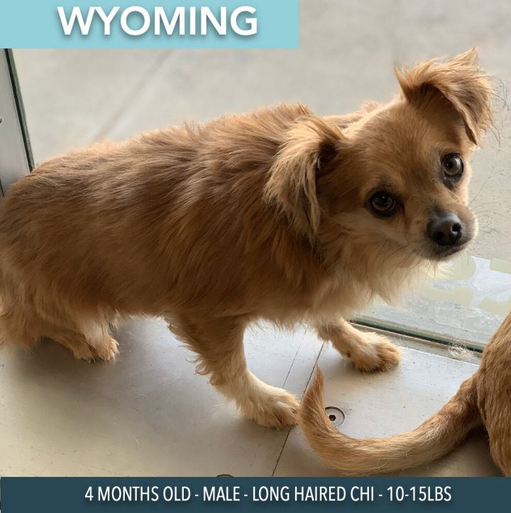 Wyoming 5