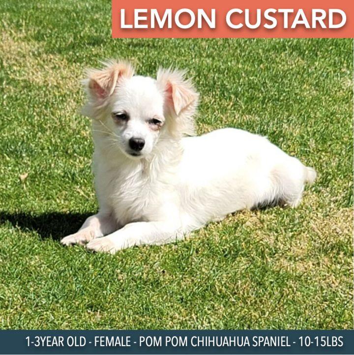 Lemon Custard 1