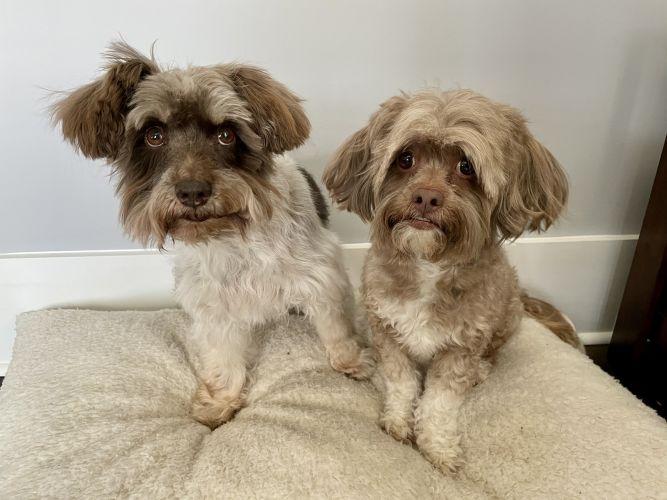 Bonded Pair - Zoey and Doogie