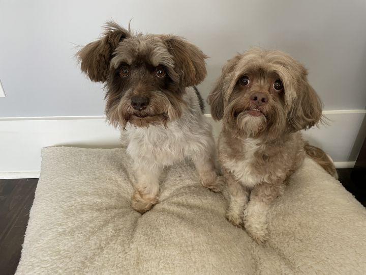 Bonded Pair - Zoey and Doogie 2