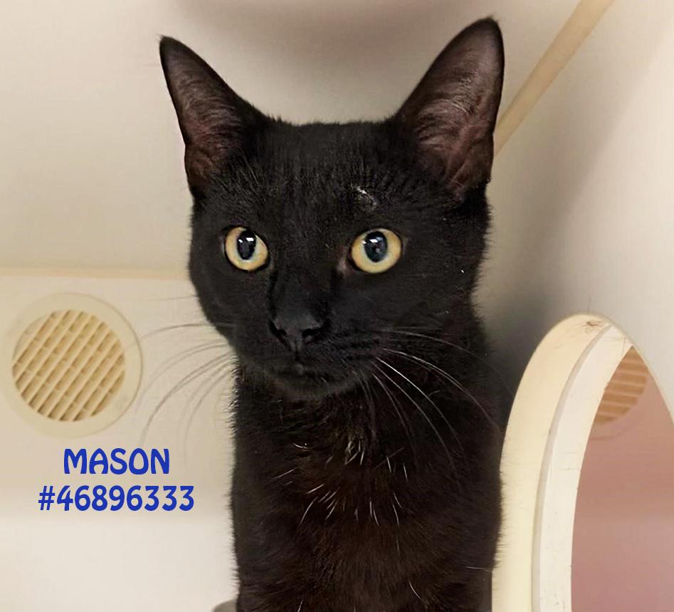 Mason detail page