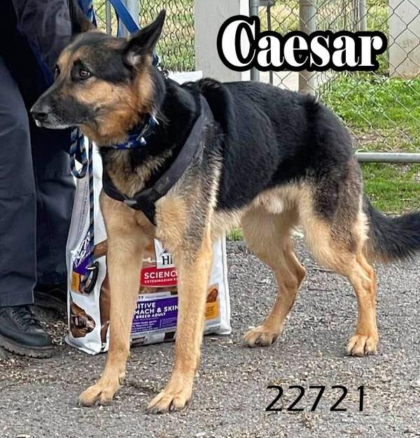 Caesar 1