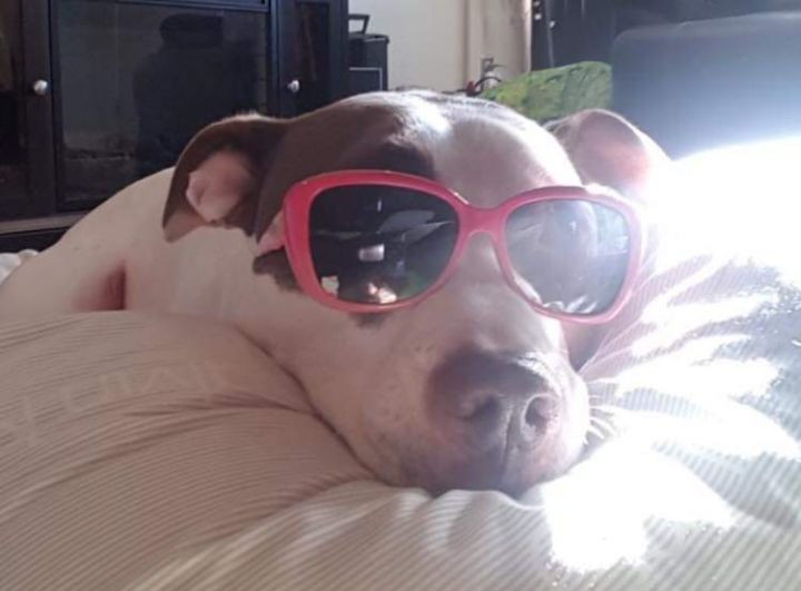 Ricco ~ Loves to dress up and laying in the sun 6