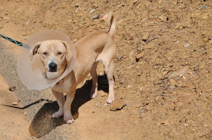 Rufus 5