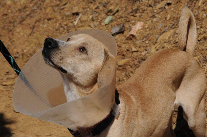 Rufus 6