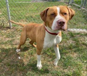 Zilla 43751 is a handful He is a strong boy that will pull you across the yard if you let