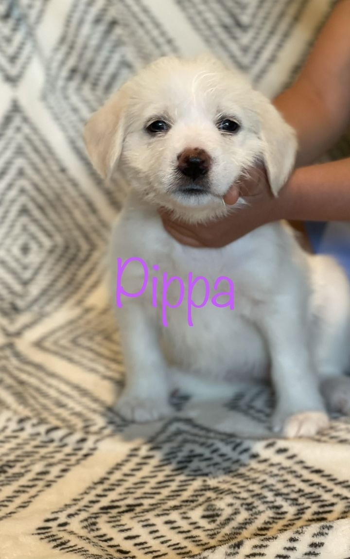 Pippa 1