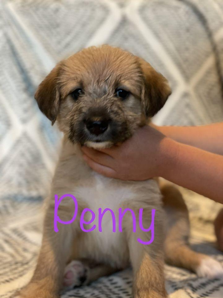 Penny 2
