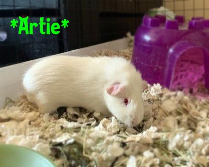 Artie detail page